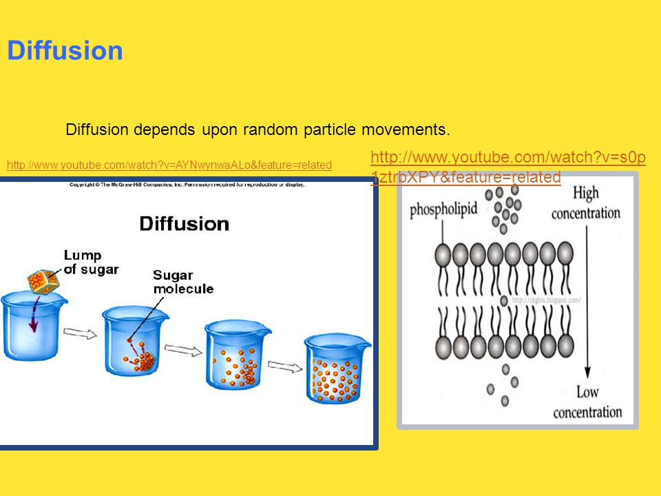 Diffusion Diffusion depends upon random particle movements.