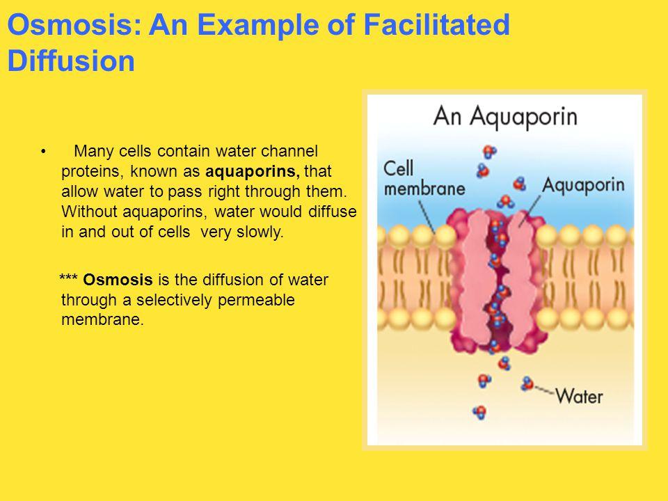 Osmosis: An Example of Facilitated Diffusion