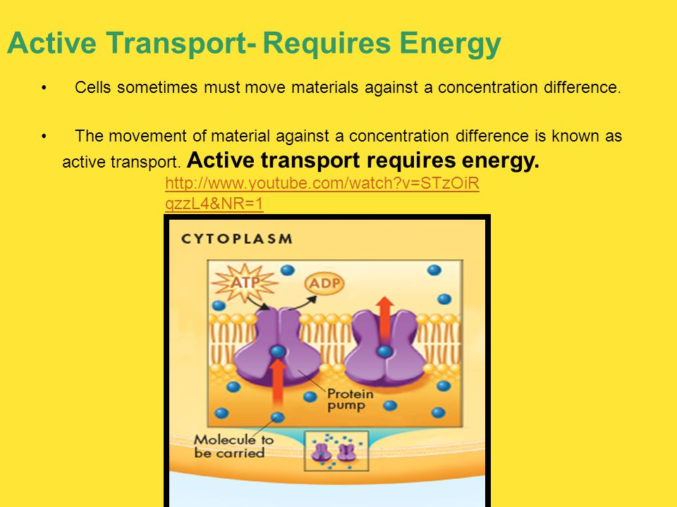 Active Transport- Requires Energy