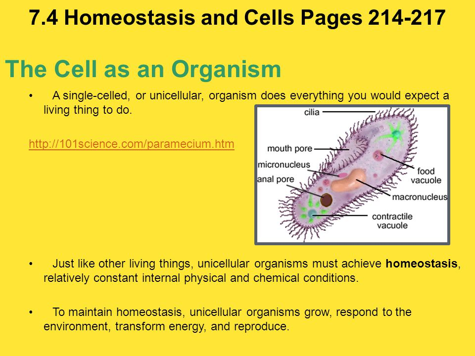 7.4 Homeostasis and Cells Pages 214-217
