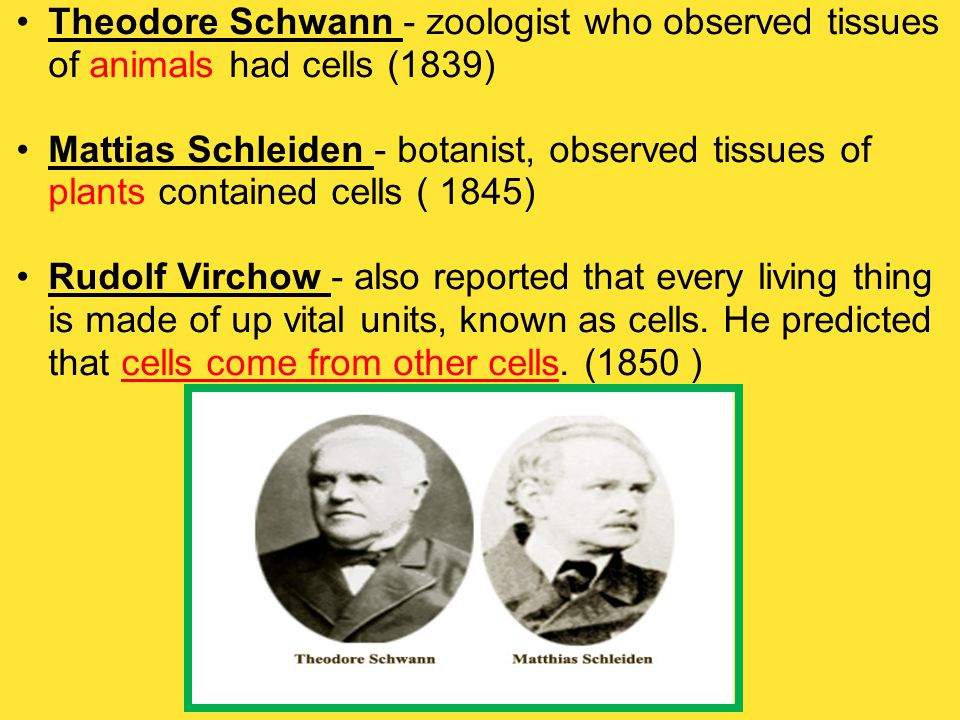 Theodore Schwann - zoologist who observed tissues of animals had cells (1839)