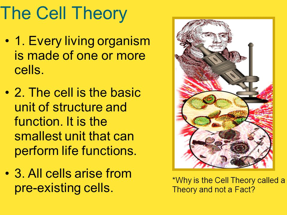 The Cell Theory 1. Every living organism is made of one or more cells.