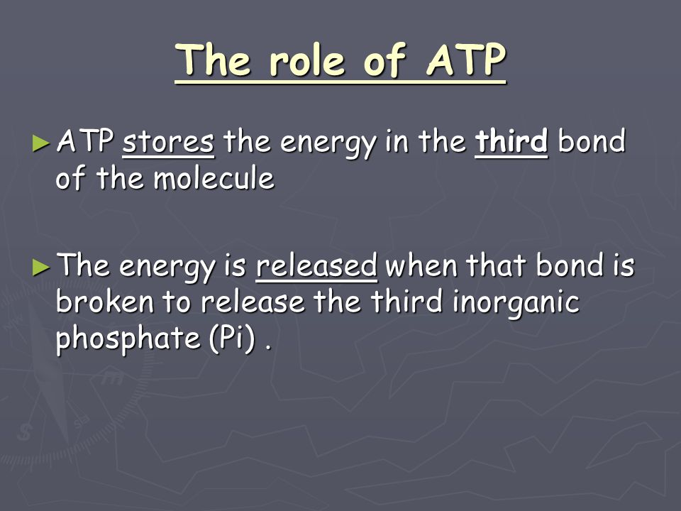 The role of ATP ATP stores the energy in the third bond of the molecule.