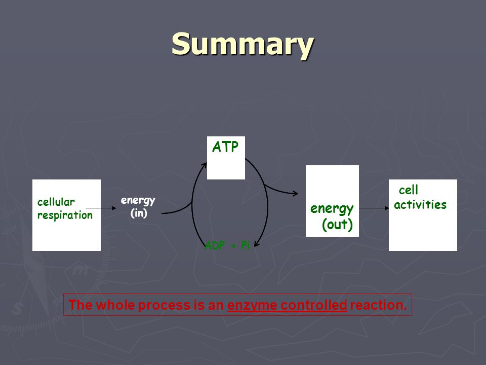 Summary ATP energy (out)