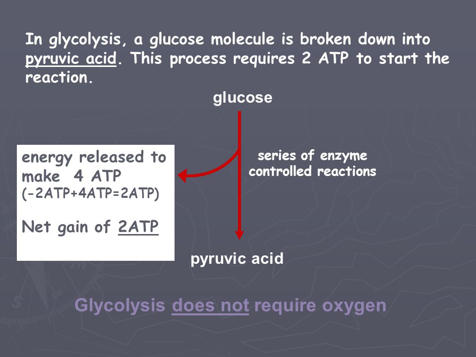 Glycolysis does not require oxygen