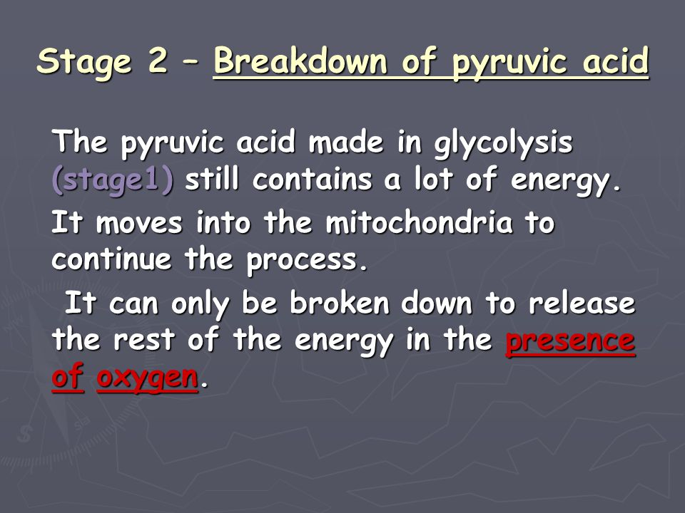 Stage 2 – Breakdown of pyruvic acid
