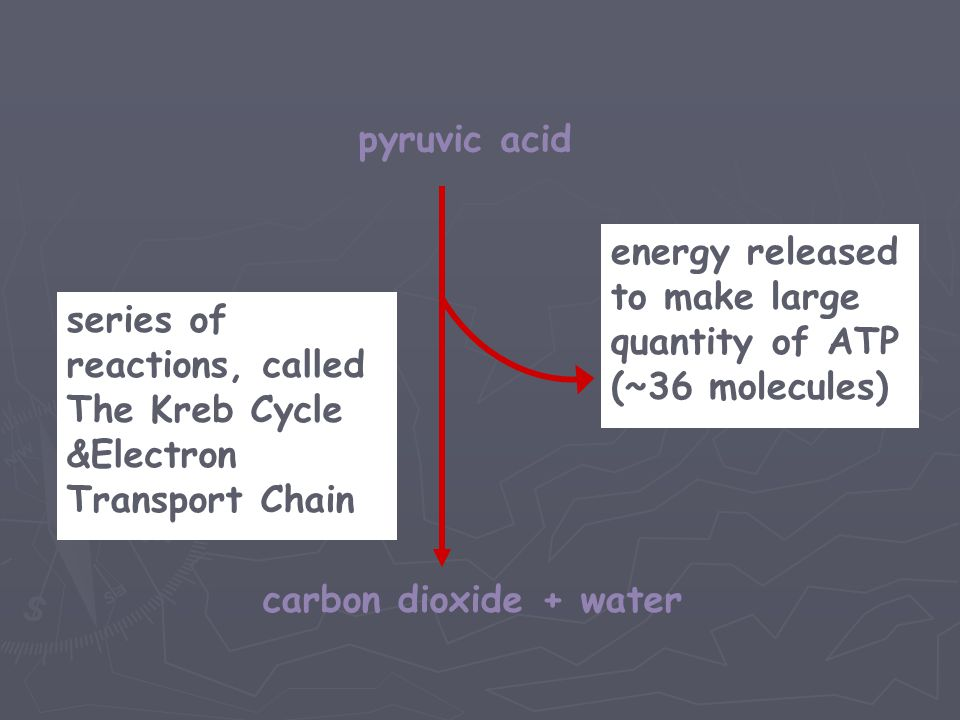 pyruvic acid energy released to make large. quantity of ATP. (~36 molecules) series of reactions, called.