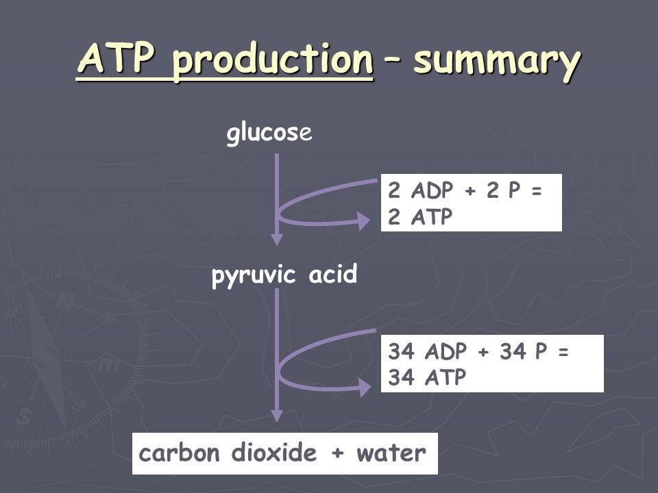 ATP production – summary