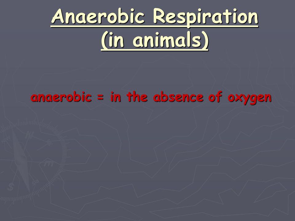 Anaerobic Respiration (in animals)