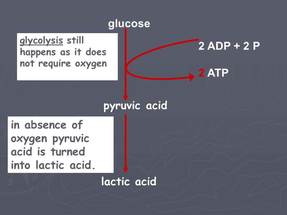 in absence of oxygen pyruvic acid is turned into lactic acid.