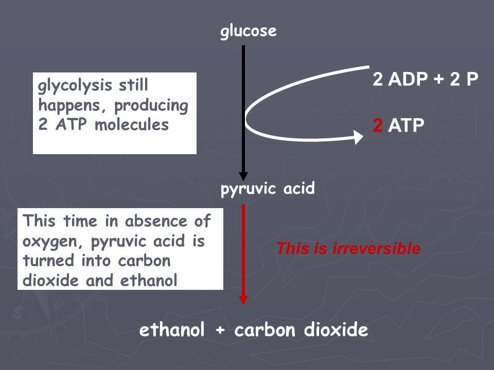 ethanol + carbon dioxide