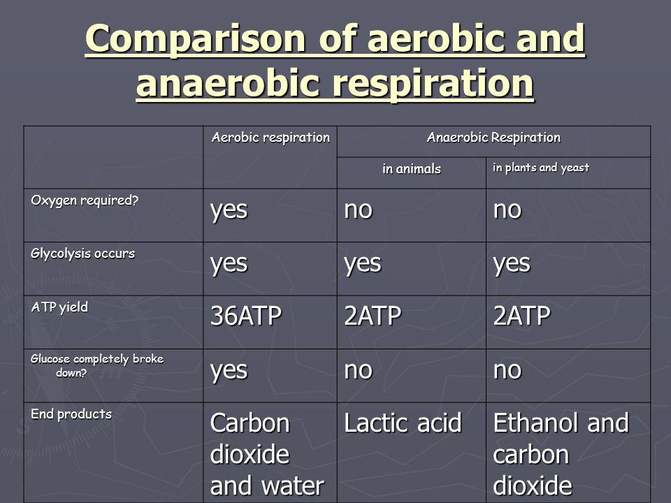 Comparison of aerobic and anaerobic respiration