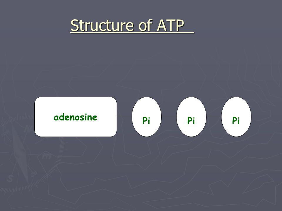 Structure of ATP adenosine Pi