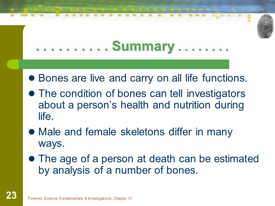 . . . . . . . . . . Summary . . . . . . . . Bones are live and carry on all life functions.