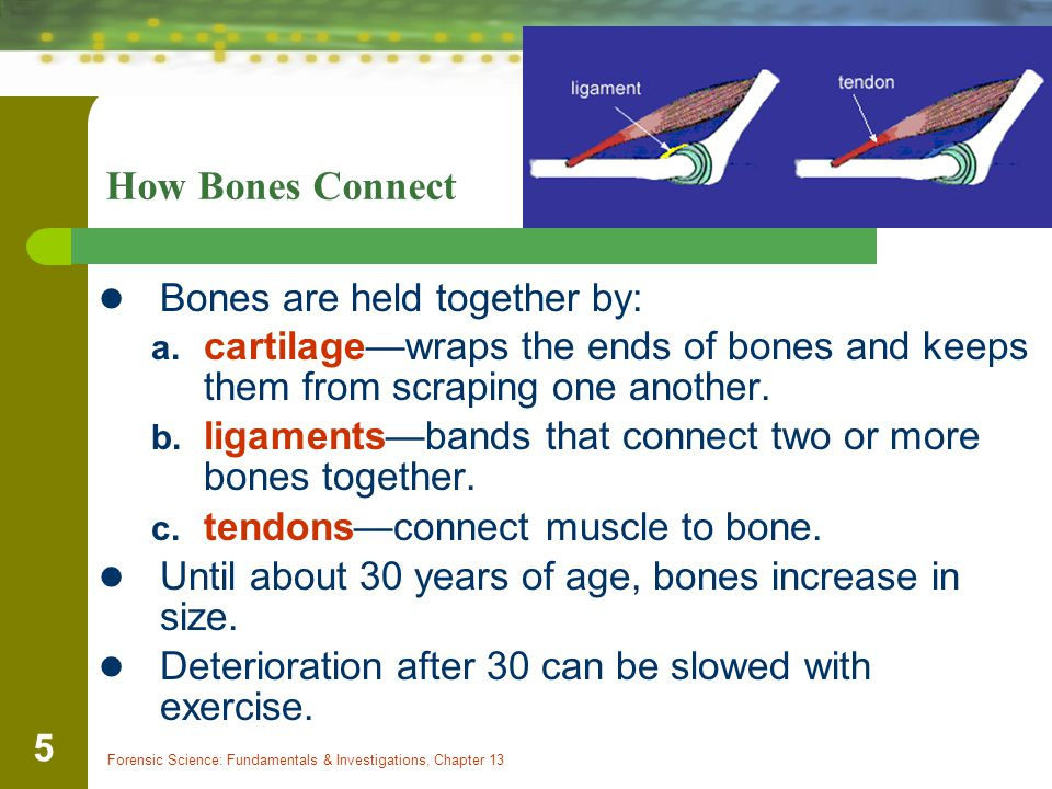 How Bones Connect Bones are held together by: