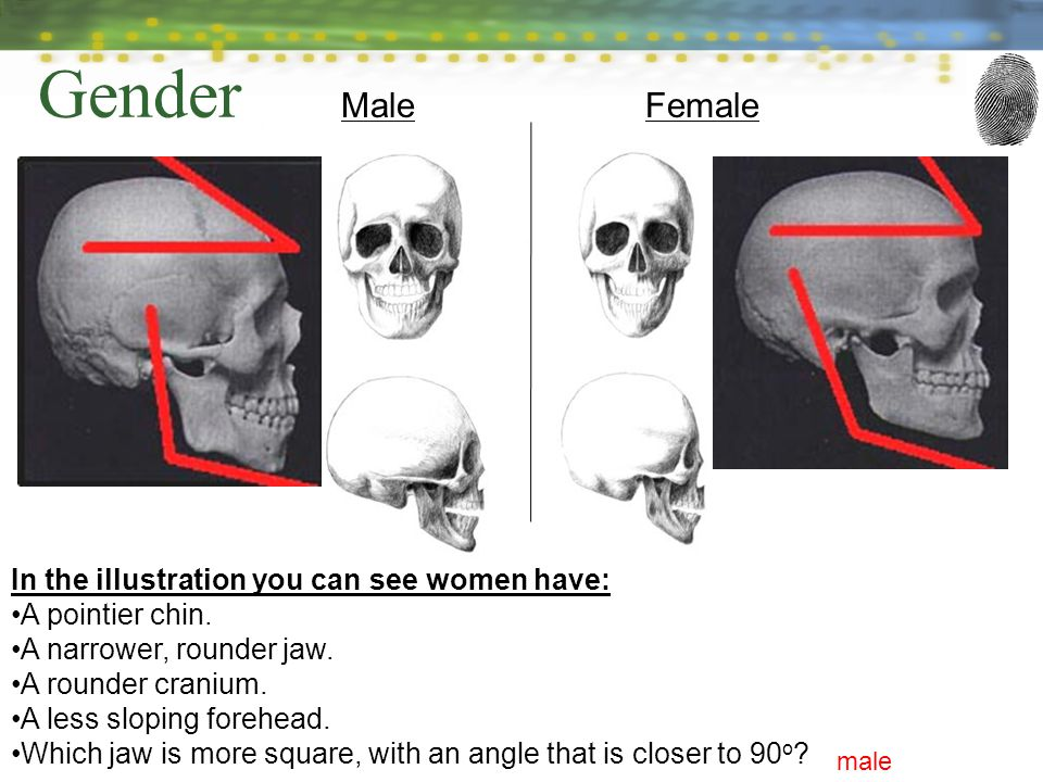Gender Male Female In the illustration you can see women have: