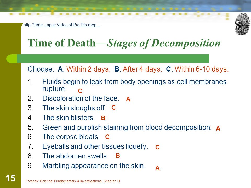 Time of Death—Stages of Decomposition