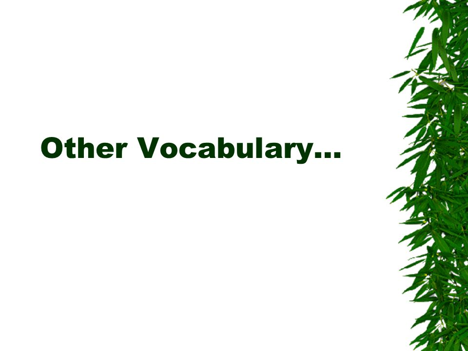 Other Vocabulary…