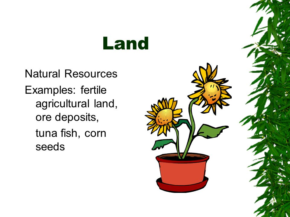 Land Natural Resources
