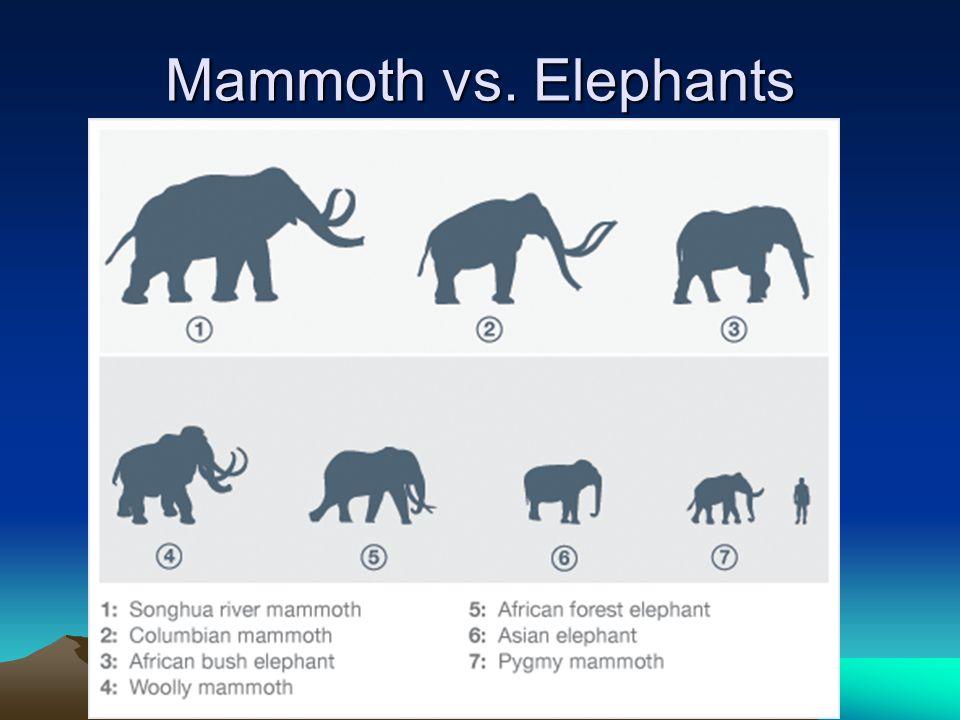 Mammoth vs. Elephants
