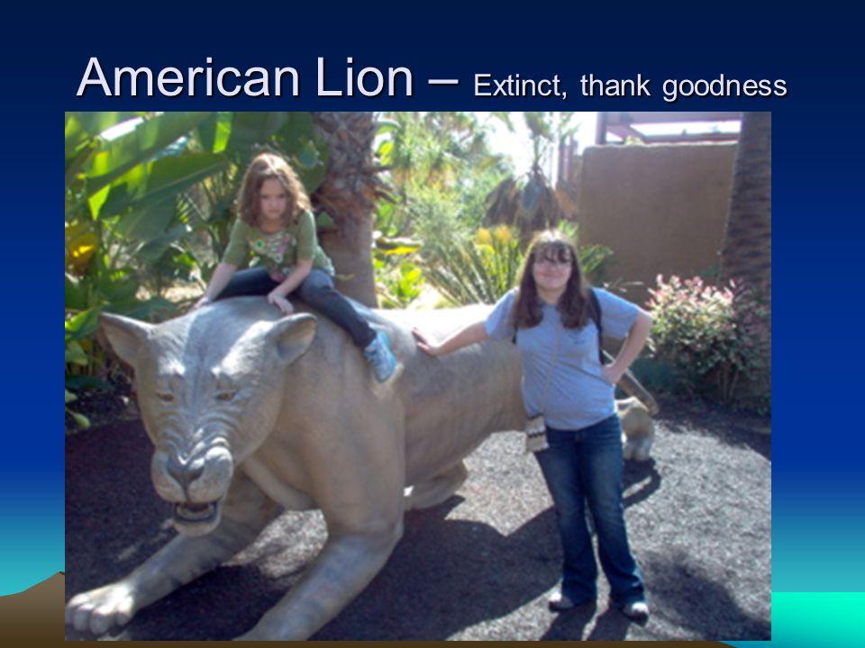 American Lion – Extinct, thank goodness