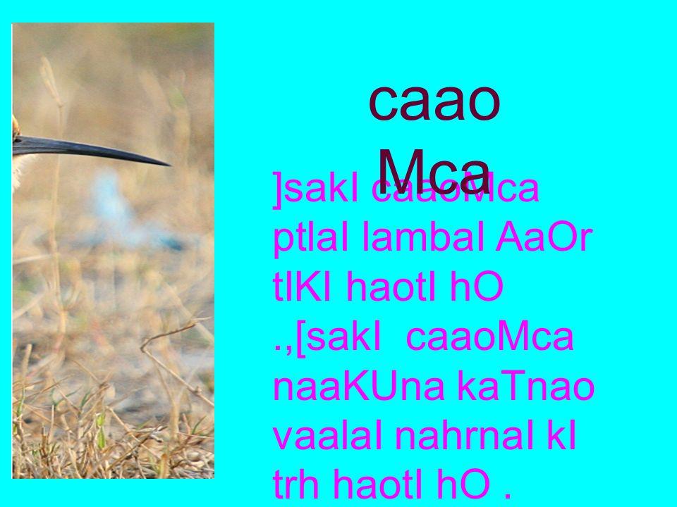 caaoMca