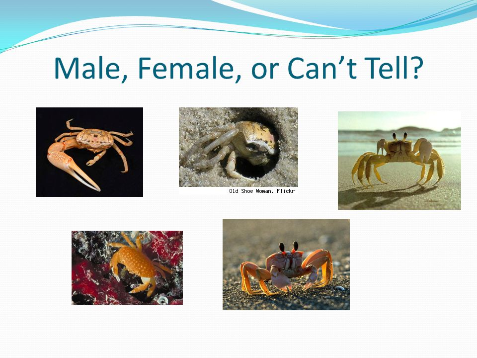 Male, Female, or Can't Tell