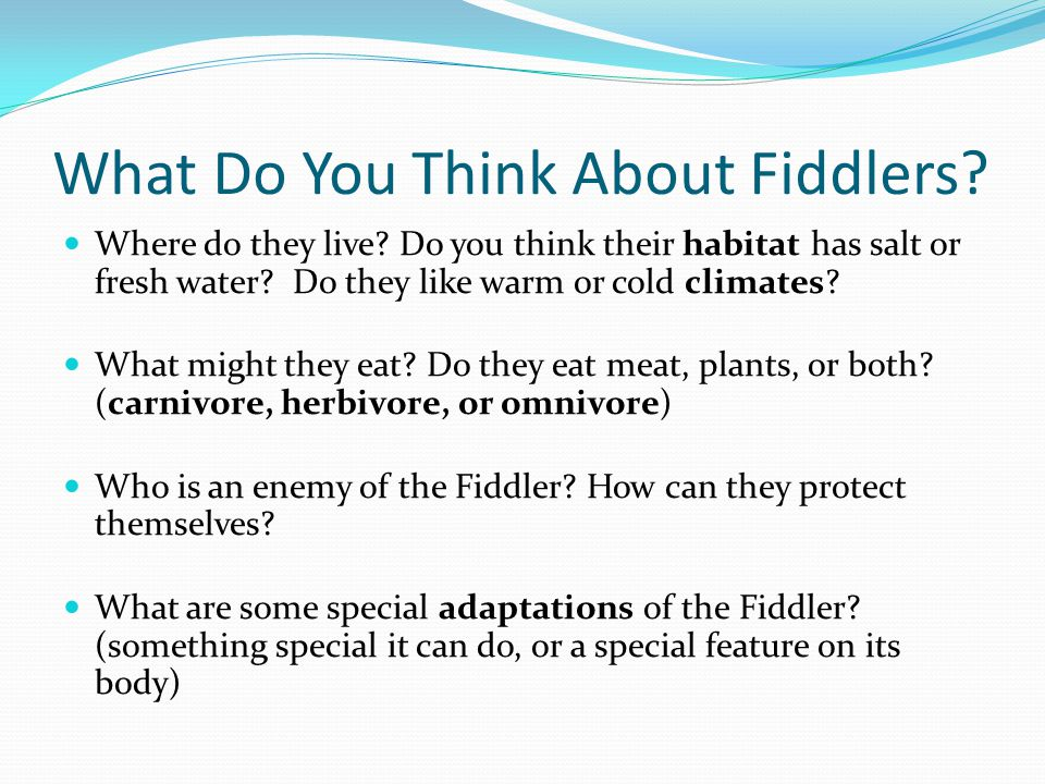 What Do You Think About Fiddlers