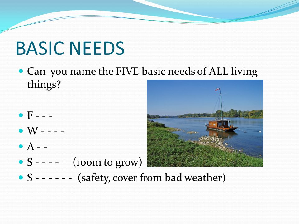 BASIC NEEDS Can you name the FIVE basic needs of ALL living things