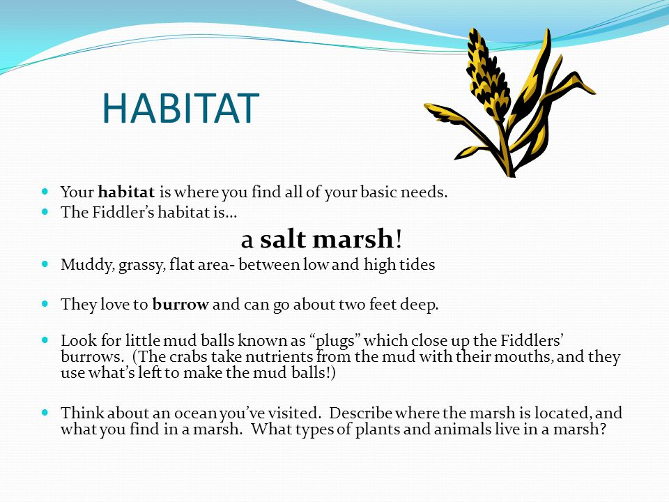 HABITAT Your habitat is where you find all of your basic needs.