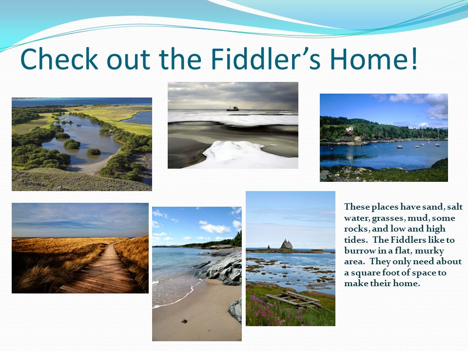 Check out the Fiddler's Home!