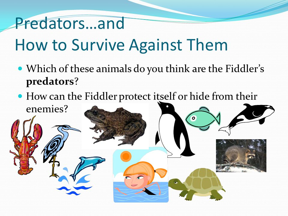 Predators…and How to Survive Against Them