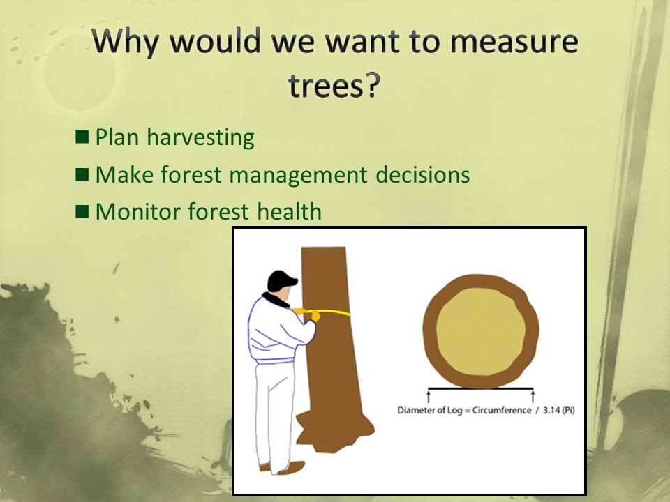 Why would we want to measure trees