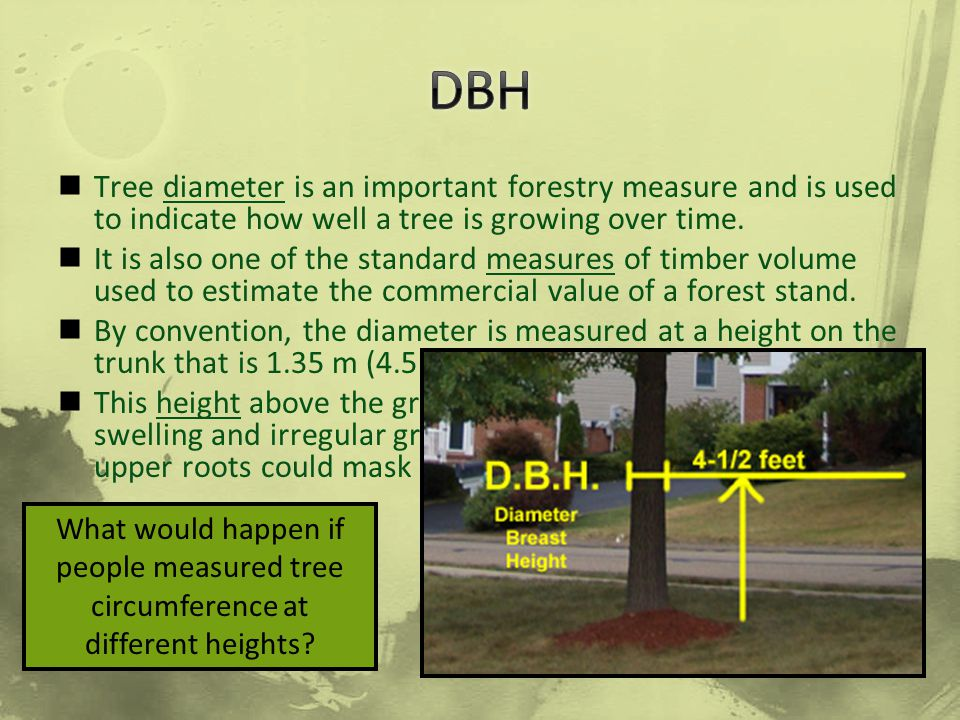 DBH Tree diameter is an important forestry measure and is used to indicate how well a tree is growing over time.