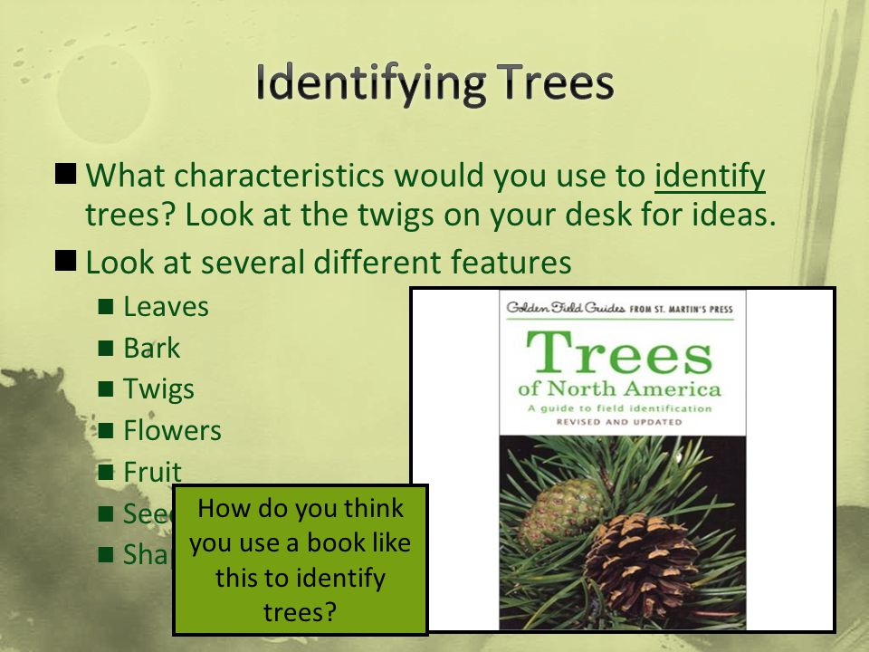 How do you think you use a book like this to identify trees
