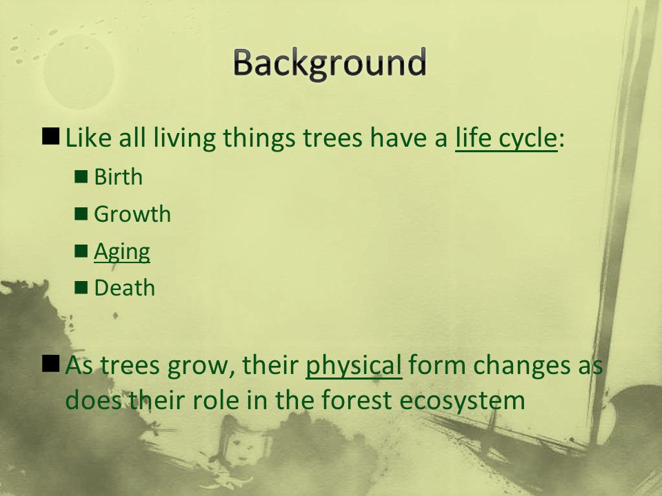 Background Like all living things trees have a life cycle: