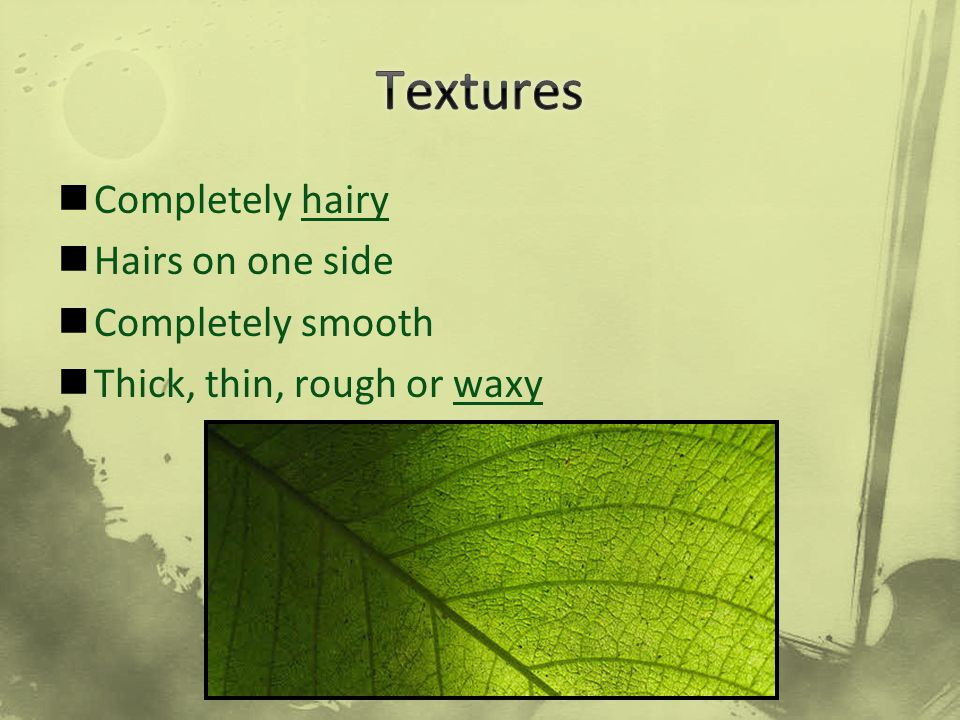 Textures Completely hairy Hairs on one side Completely smooth