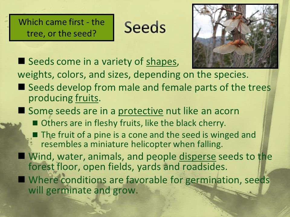Which came first - the tree, or the seed