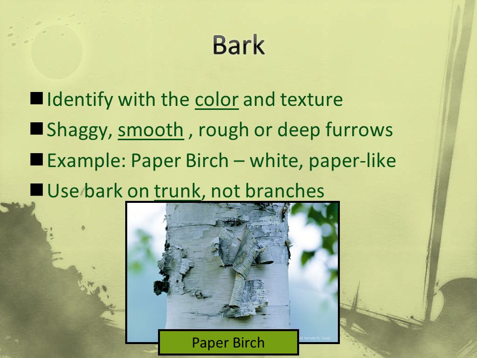 Bark Identify with the color and texture