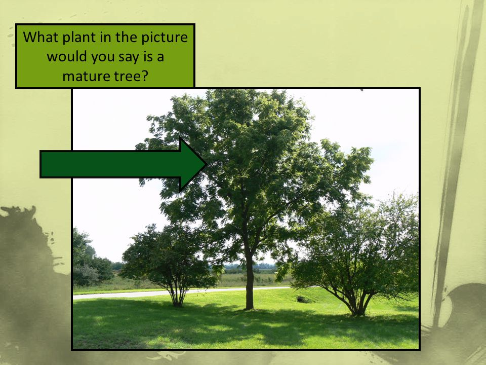 What plant in the picture would you say is a mature tree