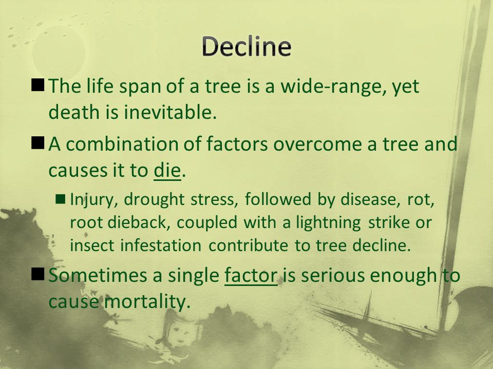 Decline The life span of a tree is a wide-range, yet death is inevitable. A combination of factors overcome a tree and causes it to die.