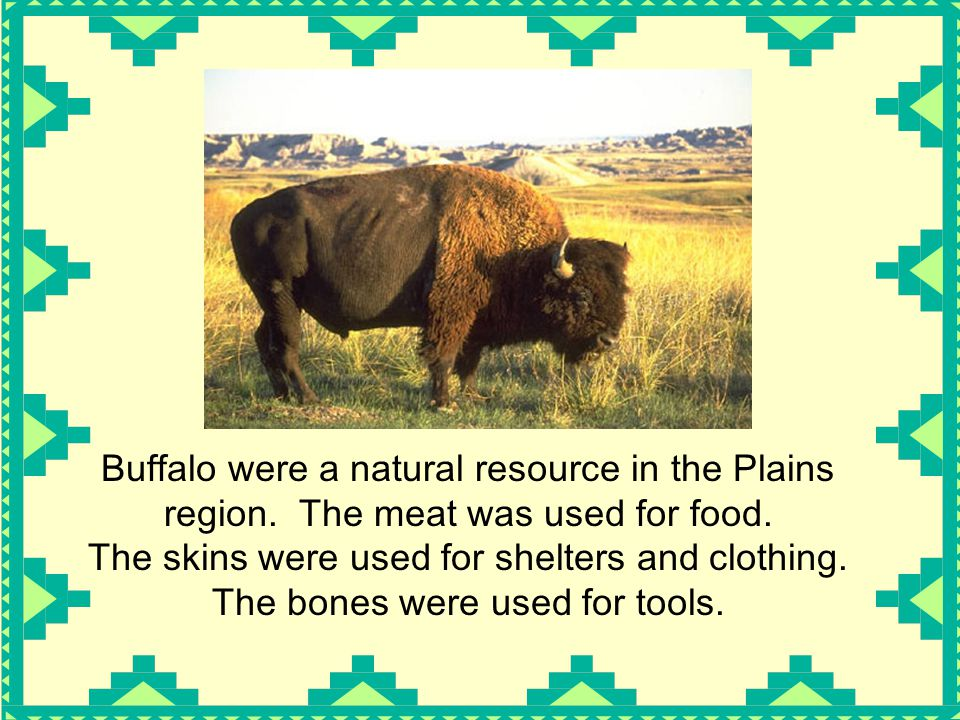 Buffalo were a natural resource in the Plains region