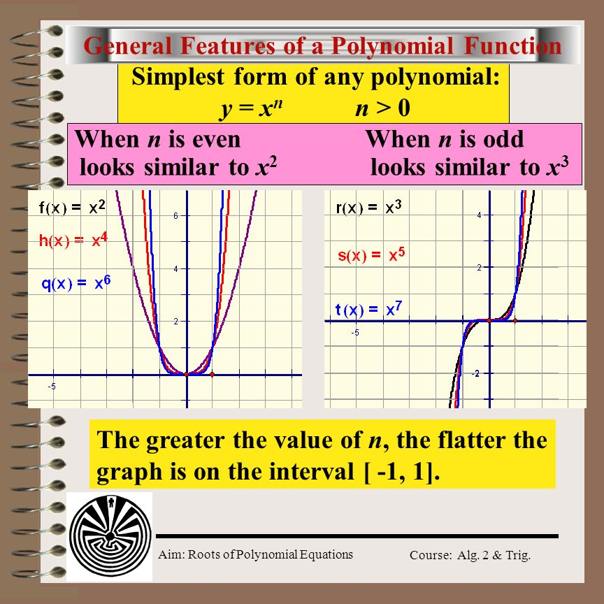 General Features of a Polynomial Function