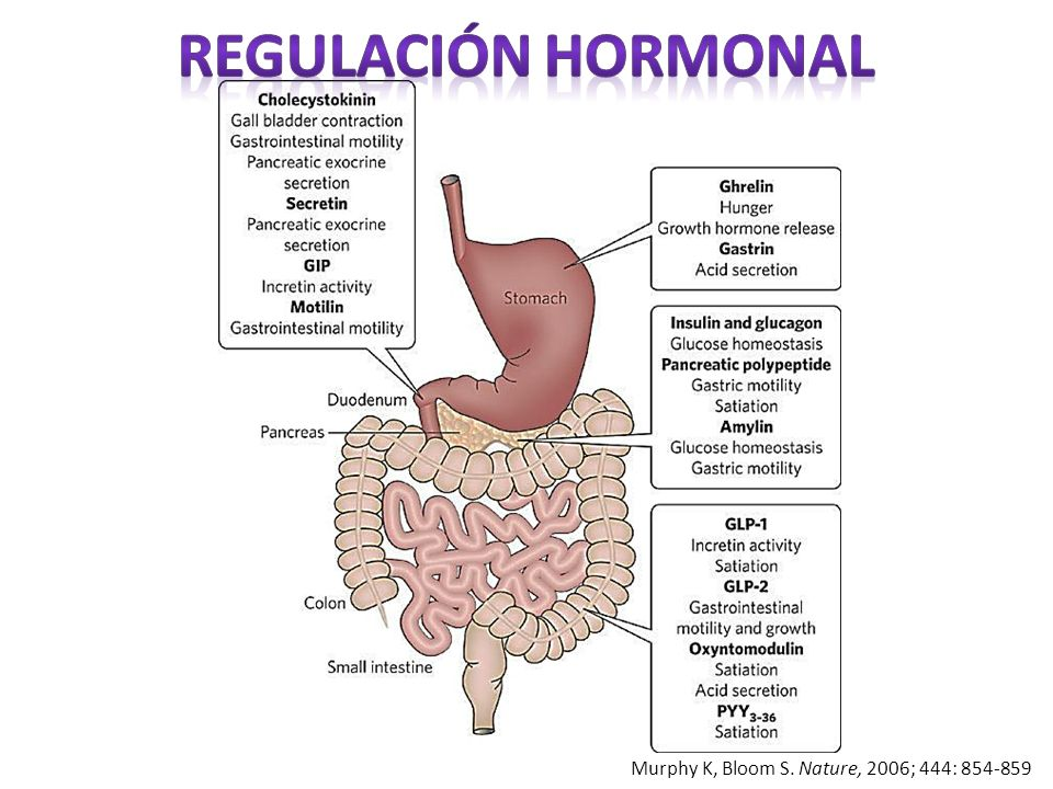 Regulación hormonal Murphy K, Bloom S. Nature, 2006; 444: 854-859