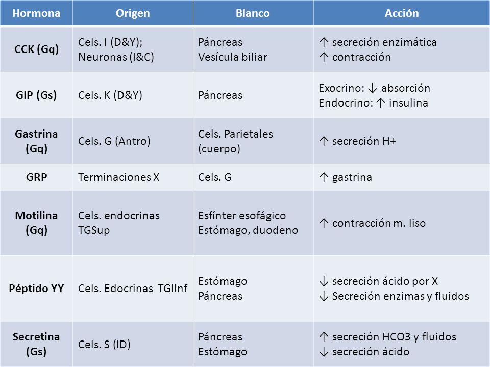 Hormona Origen. Blanco. Acción. CCK (Gq) Cels. I (D&Y); Neuronas (I&C) Páncreas. Vesícula biliar.