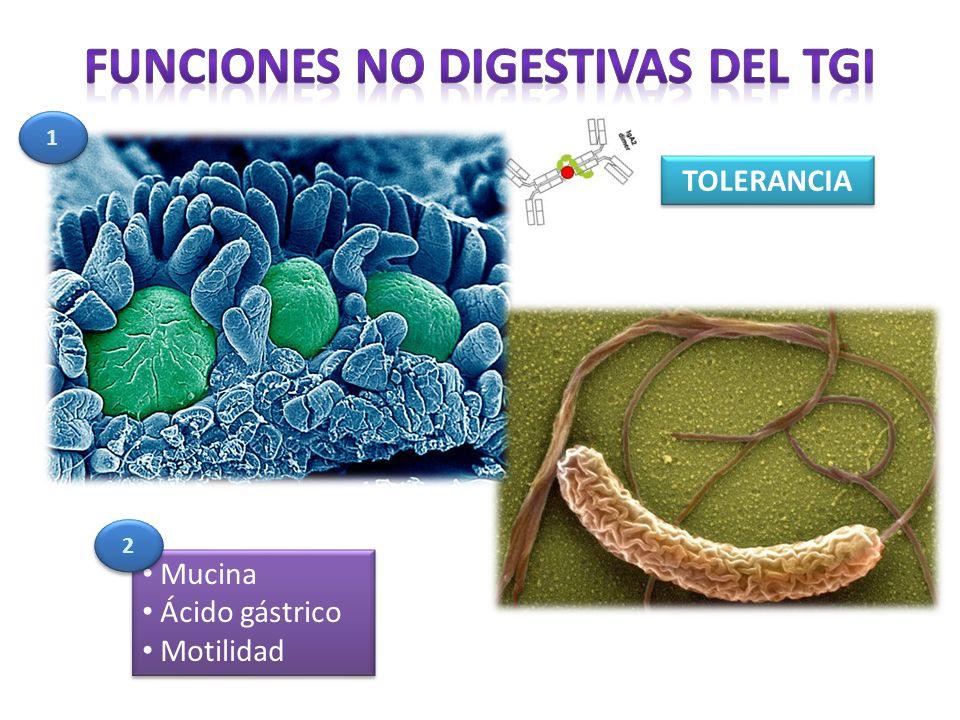 Funciones no digestivas del TGI