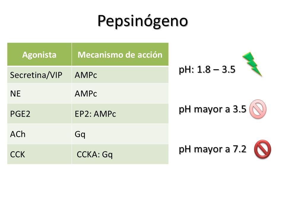 Pepsinógeno pH: 1.8 – 3.5 pH mayor a 3.5 pH mayor a 7.2 Agonista