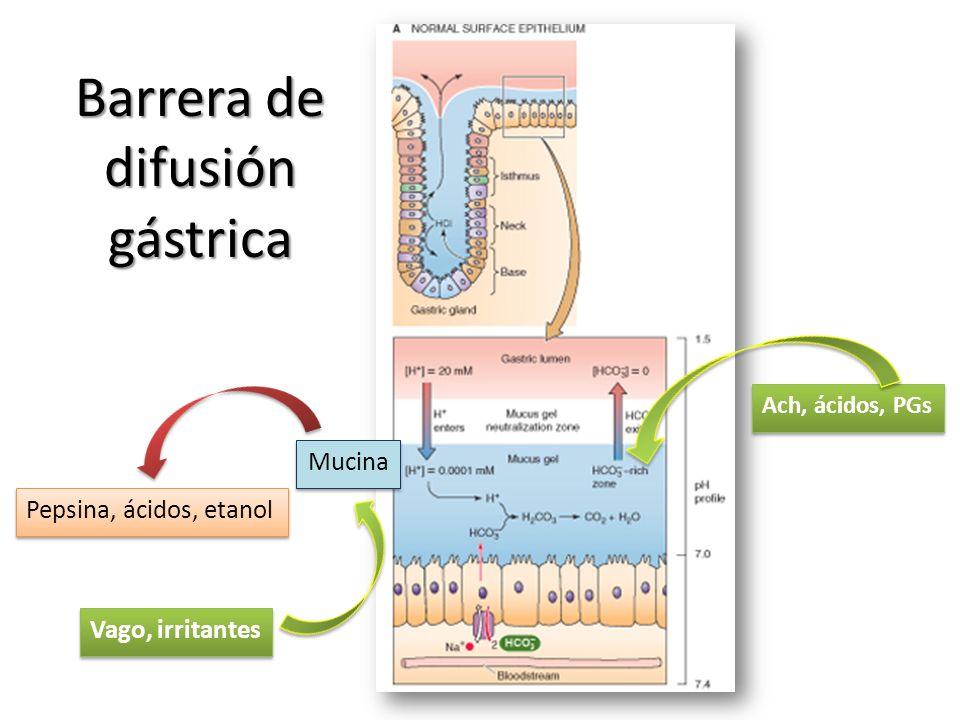 Barrera de difusión gástrica