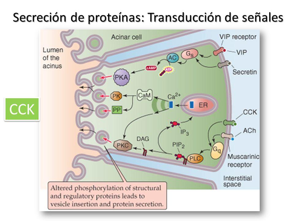 Secreción de proteínas: Transducción de señales
