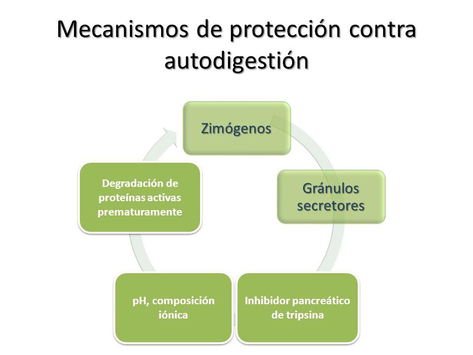 Mecanismos de protección contra autodigestión
